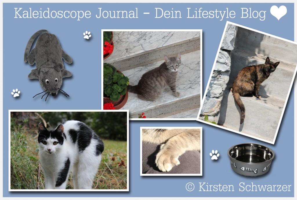 Die Betreuung der Mieze in der Urlaubszeit, www.kaleidoscope-journal.de, Kirsten Schwarzer