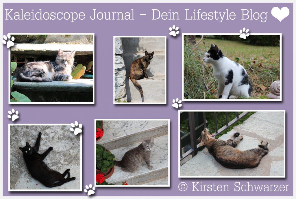 Plötzlich Frauchen - ein Kater zieht ein, www.kaleidoscope-journal.de